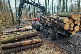 Holz poltern